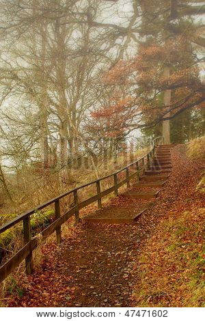 Misty Forest Footpath