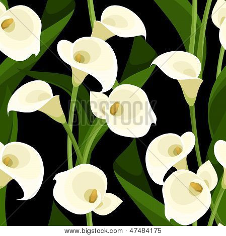 Seamless pattern with white calla lilies on black. Vector illustration.