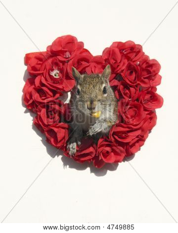 Valentine Squirrel