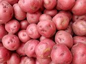 Pile of Red Potatoes for sale at farmers market in Honolulu Hawaii. poster