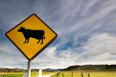 a bright yellow cow sign along a beautiful country road. poster