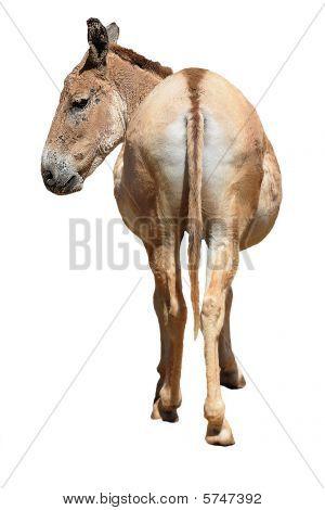 Donkeys Rear