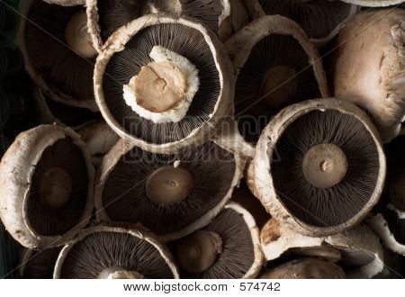 Common Brown Edible Mushrooms