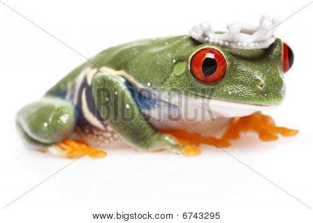 Frog Prince!