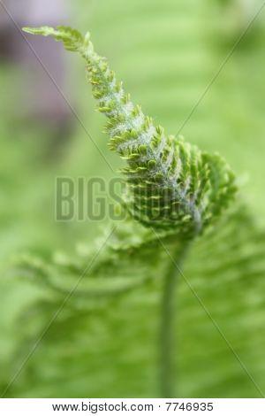 Beautiful Leaf Of The Fern