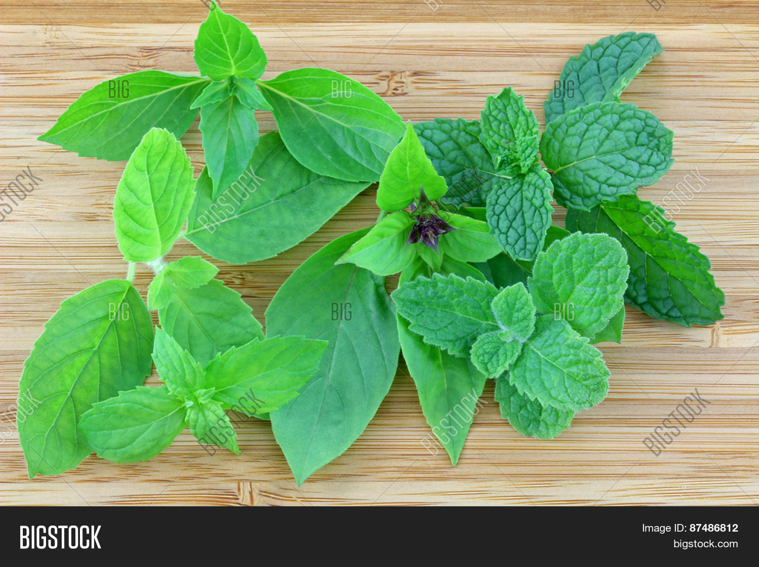 different types basil mint leaves image & photo | bigstock