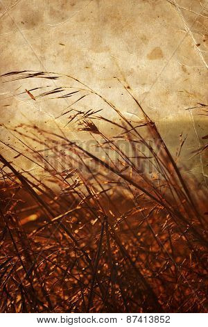 Close up of dry thick grass. Fall background, weeds on the field