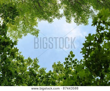 Natural Frame Of Trees Over Blue Sky