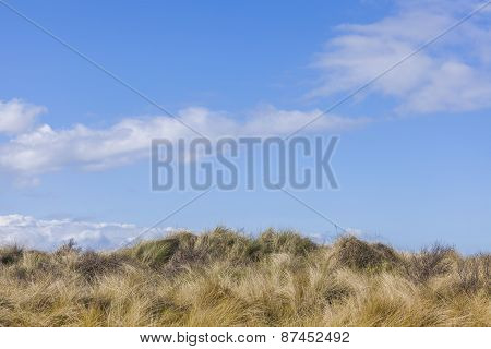 Sunny Blue Spring Time Sky And Grassy Hill