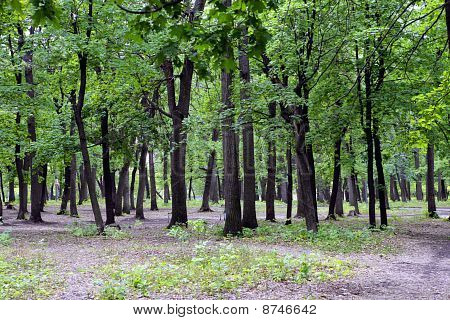 Wood trees in summer day