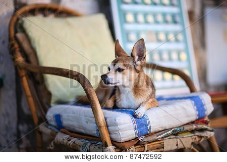 Dog lying on a wooden chair
