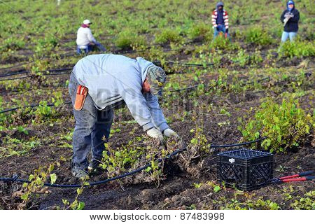 Mexican Farm Worker