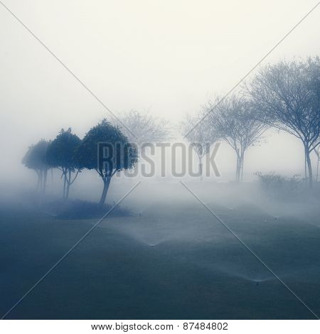 Row of small trees  in perspective in beautiful, misty weather. An abstract nature background.