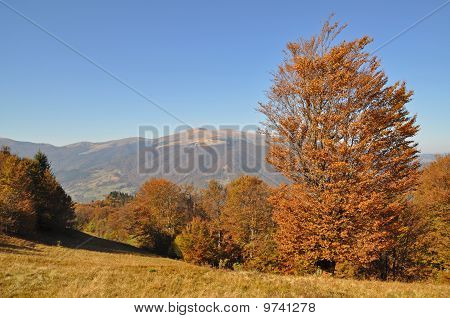 Autumn in mountains.