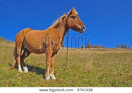 Horse on a hillside.