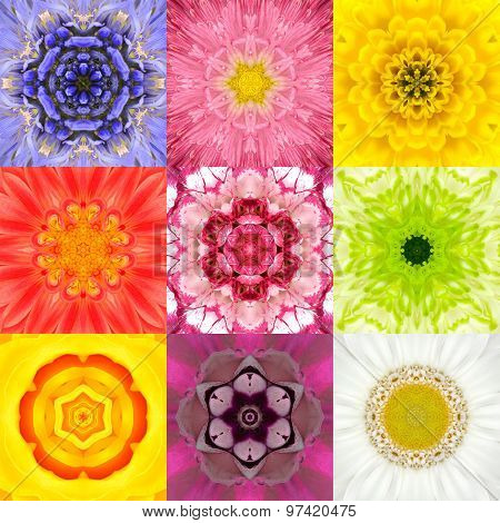 Collection Set Nine Flower Mandalas Various Colors Kaleidoscope