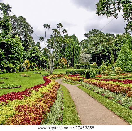 Botanical Garden Of Peradeniya