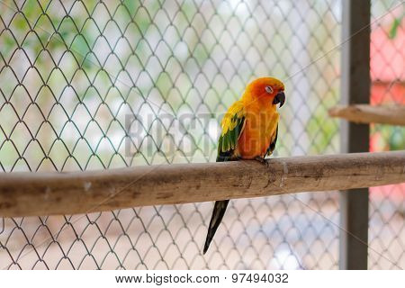 A Sun Parakeet Parrot Sleeping And Perching On The Branch