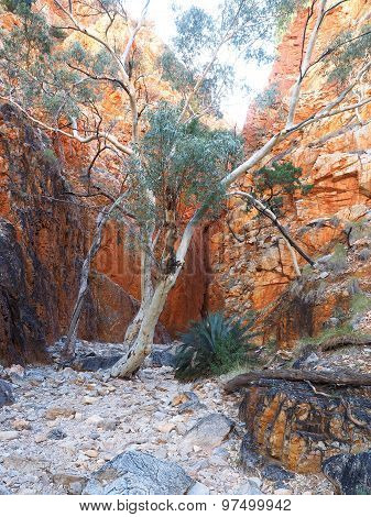 Late afternoon view at Standley Chasm