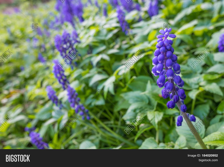 Wild Blue Flowers Image Photo Free Trial Bigstock