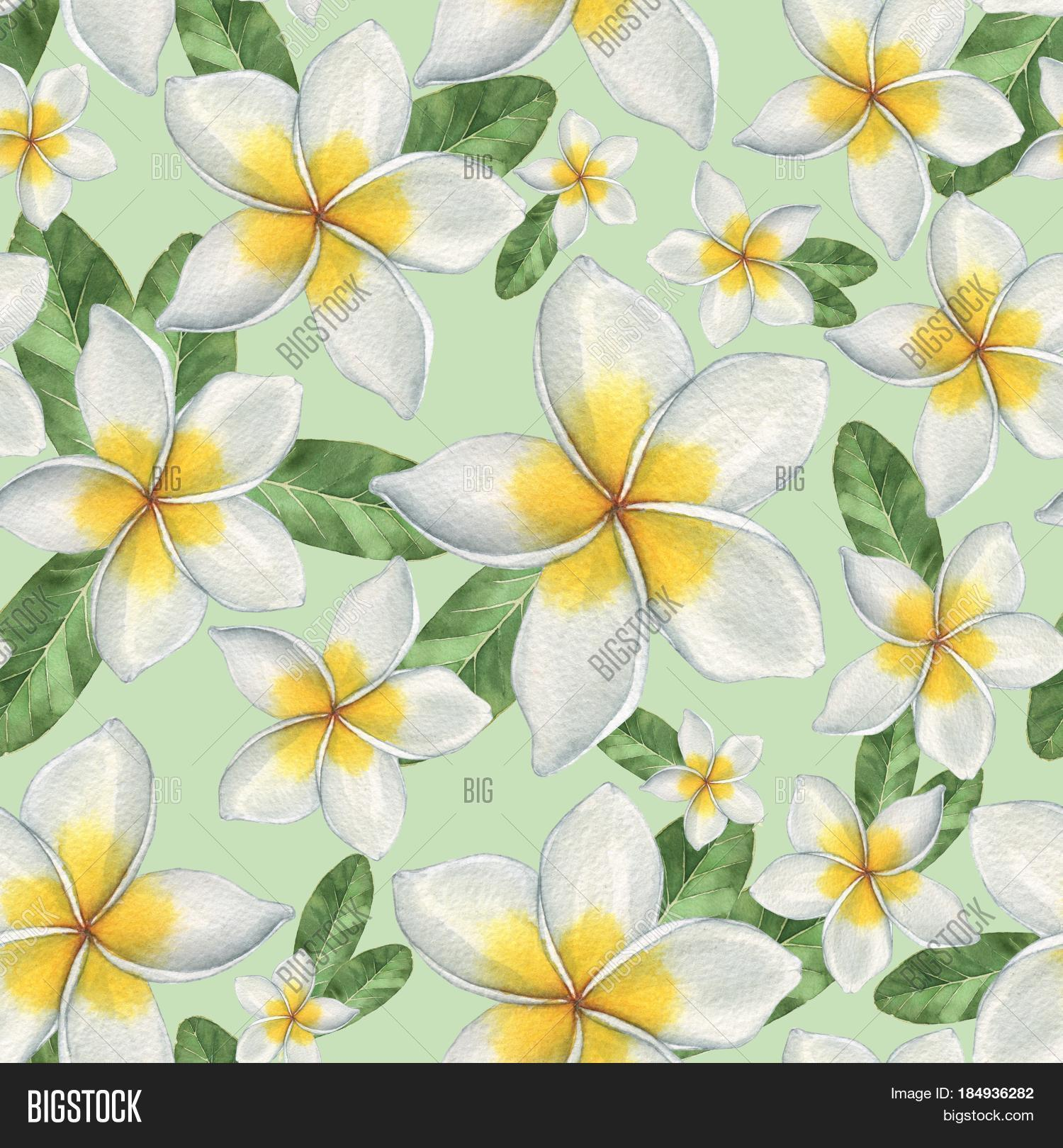 Hawaiian Flowers Image Photo Free Trial Bigstock