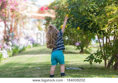 Cute baby boy small child with long blond hair in blue clothes picking yellow blossoming flowers from bushes on green grass in summer park on sunny natural background. vacation childhood and nature