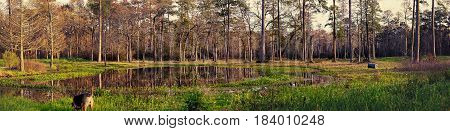 A panorama of a forest in Houston Texas