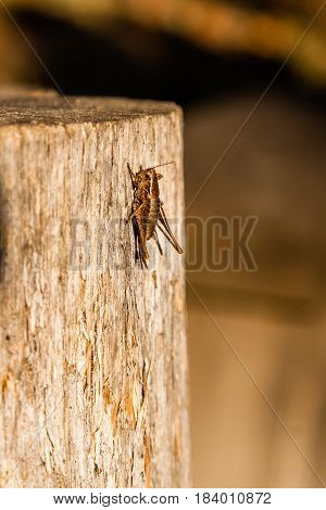 In The Sunlight A Grasshopper Sits On A Log