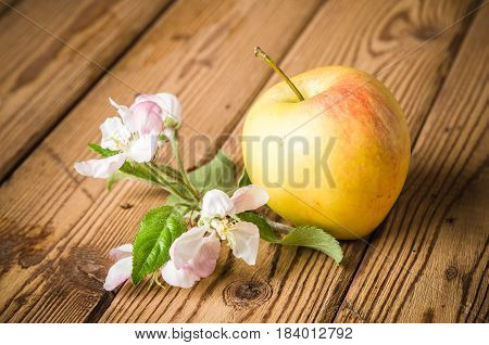Ripe apple and blossoming branch of an apple-tree on a wooden surface close-up