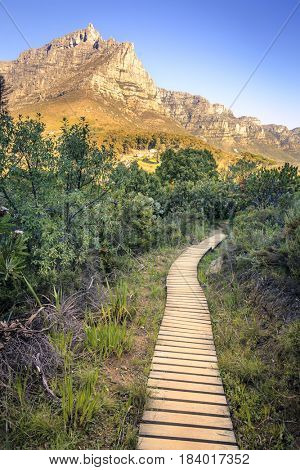 Hiking path by Lions Head in Cape Town, South Africa with a view to Table Mountain