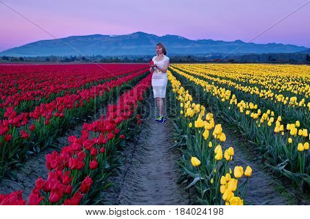 Young woman in colorful tulip fields at sunset. Tulip Festival. Skagit Valley. Mount Vernon. Seattle. WA. United States.