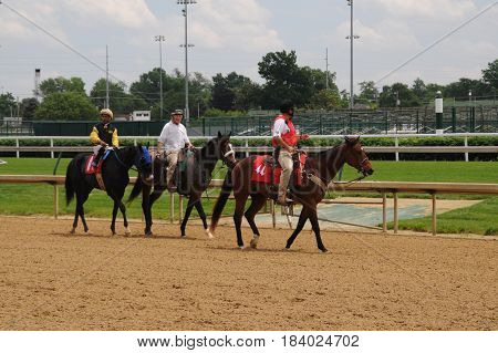 horse being led to starting gate for horse race at Churchill Downs, May 27th, 2016