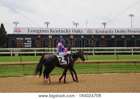 horse and rider heading to the starting gate at Churchill Downs, May 27th, 2016