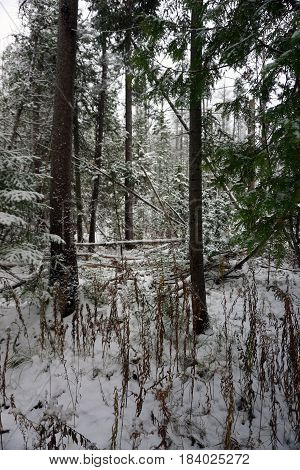 Fresh snow blankets the forest in the Richard H. and Lydia Naas Raunecker Preserve in Harbor Springs, Michigan during November.