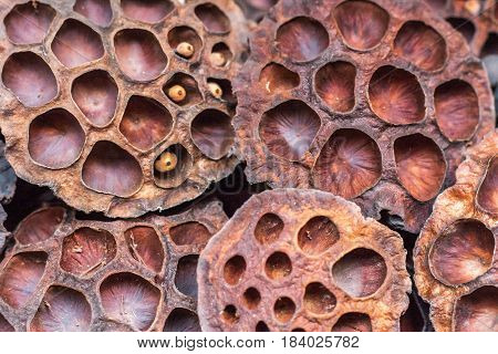 Dry lotus pods with some seeds and empty holes close up for back ground. Seed stem. Amazing incredible plant creature of nature.