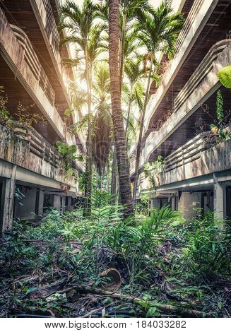 Destroyed Jungle overgrown buildings.  photo.