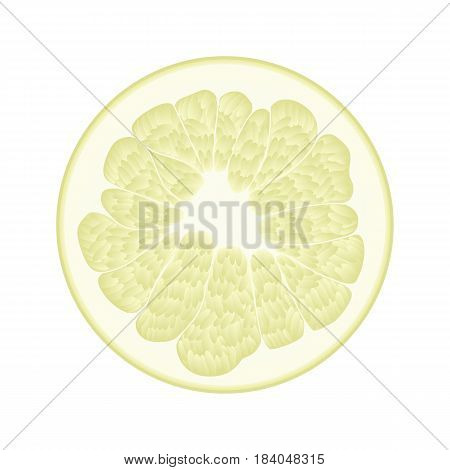 Isolated circle of juicy yellow color pomelo on white background. Realistic colored round slice