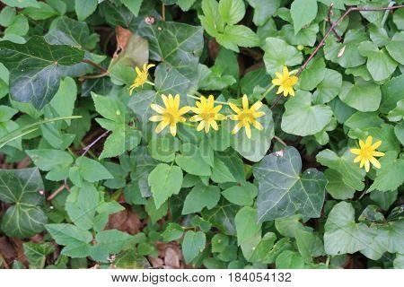Mooie gele bloemetjes in een groen veld