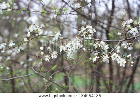 Mooie witte bloemetjes aan tak in het bos