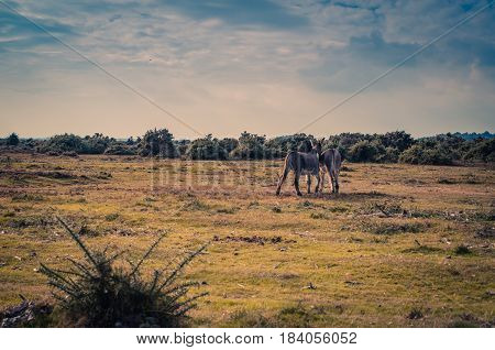 Donkeys on a field near the New Forest, Hampshire, UK.
