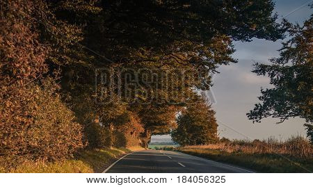 Road going through the New Forest, in Hampshire, late autumn.