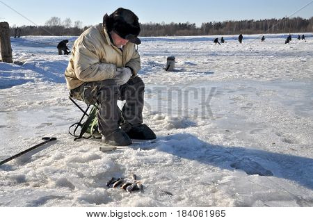 JELGAVA LATVIA - MARCH 9 2011: Unknown ice angler catch fish on the frozen river.