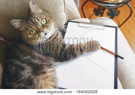 Business Cat Lies On Empty Clipboard