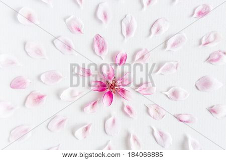 top view on part of round pattern of sakura flowers laying on white background. Concept of love and spring. Dof on sakura flowers.