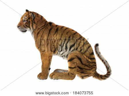 3D Rendering Big Cat Tiger On White