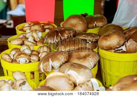 farmer's market selling Mushrooms crates on the market