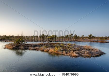 Landscape photography. Swamp on a cold winter morning.
