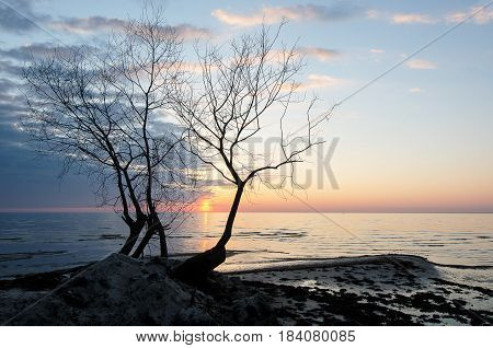 Lonely tree silhouette by the sea at sunset.
