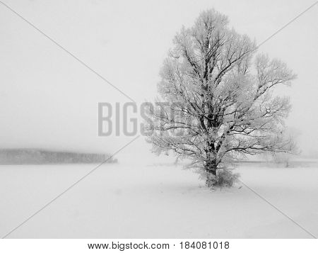 Abstract winter landscape with a lone tree in white snow.