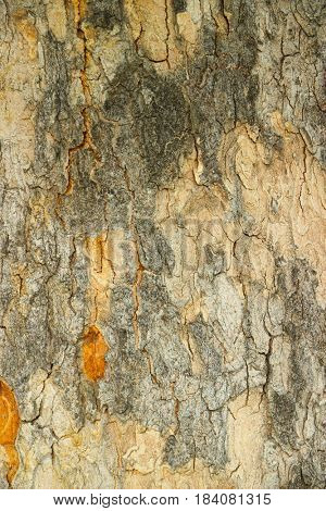 Old tree bark texture close up